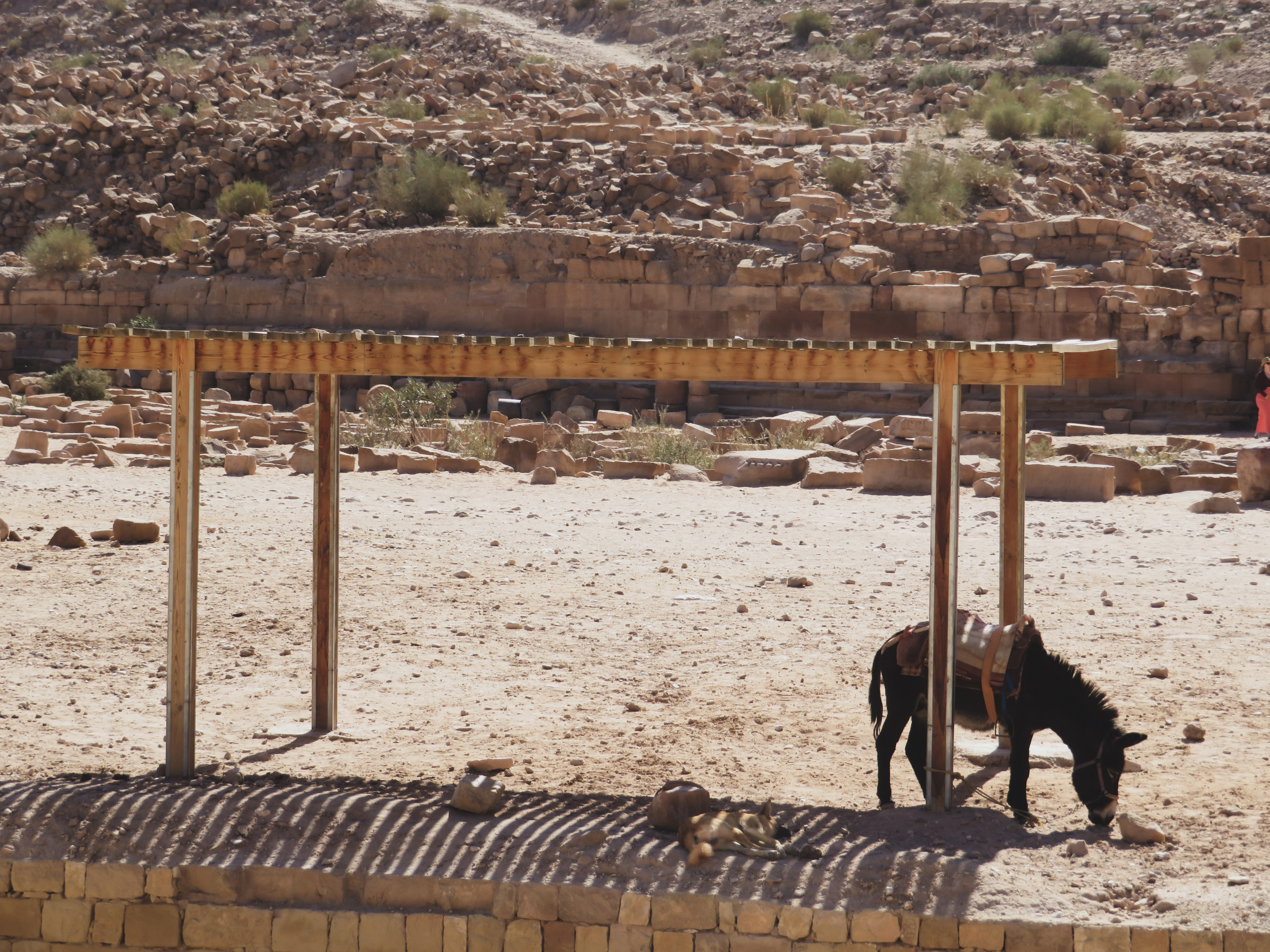 donkey and dog at petra, jordan